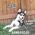 He was breaking back in the yard