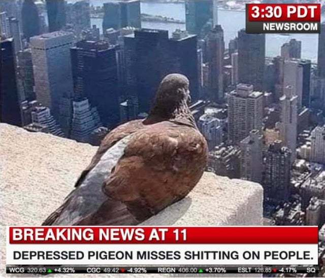 Depressed pigeon misses shitting on people - meme