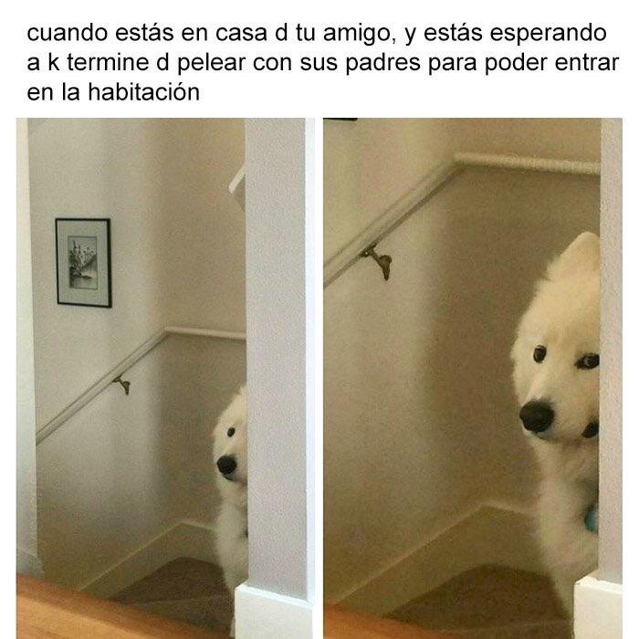 #MomentosIncomodos - meme