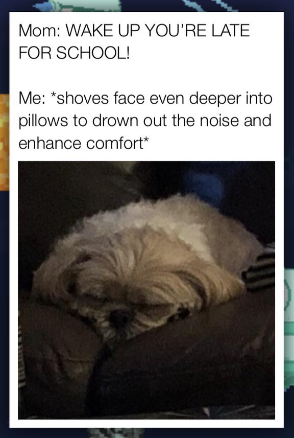 Sleep enhances learning ability - meme