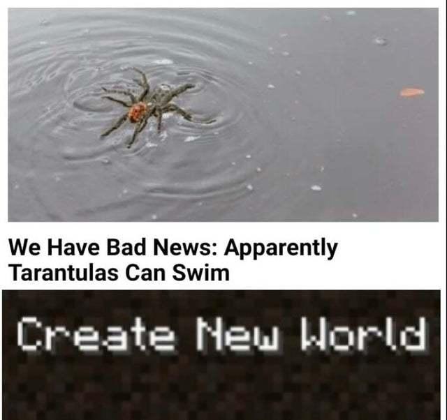 Apparently tarantulas can swim - meme