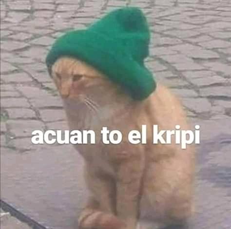 Gato drogadicto PNG. - meme