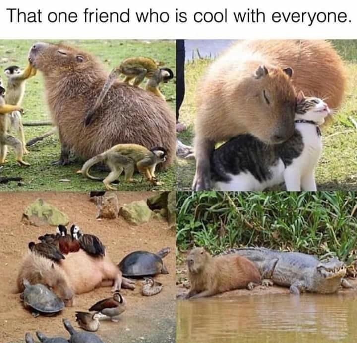 Friendship - meme