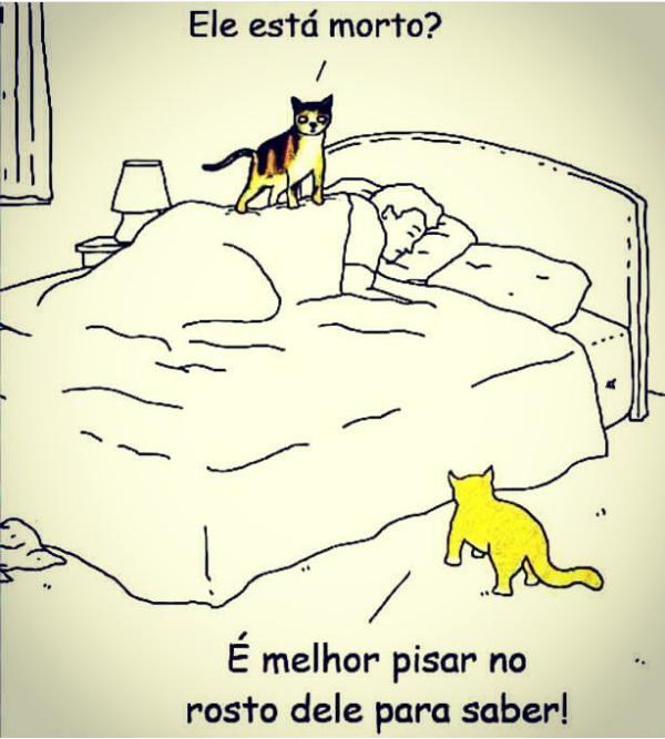 Gatinhos - meme