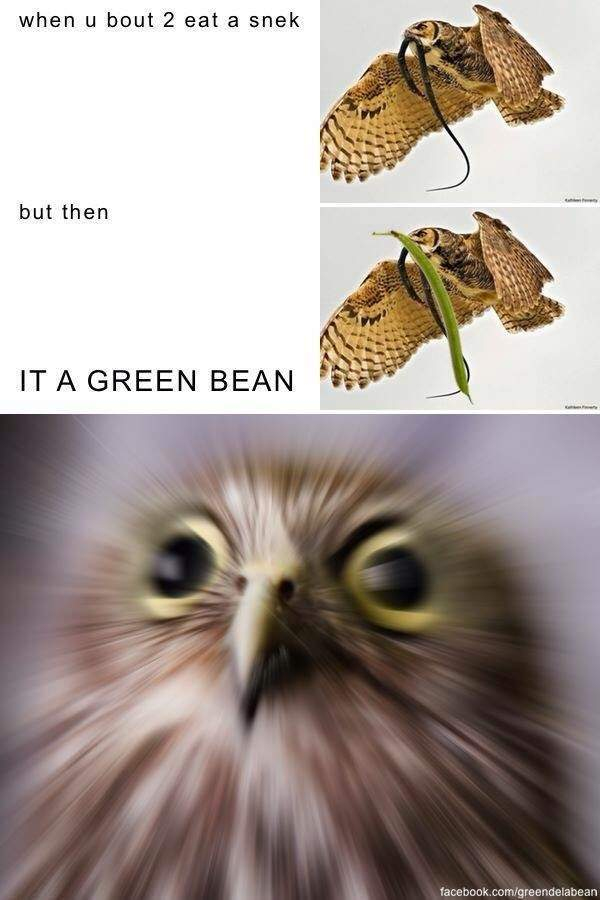 Birb Iz Bamboozled - meme