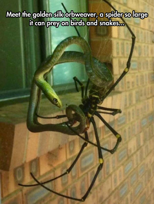 For the people who have arachnophobia. - meme