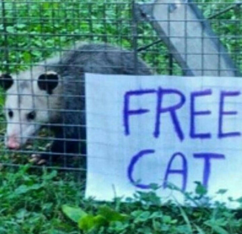 Free cat - meme