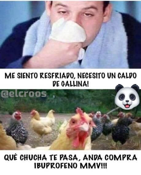 gatitos - meme