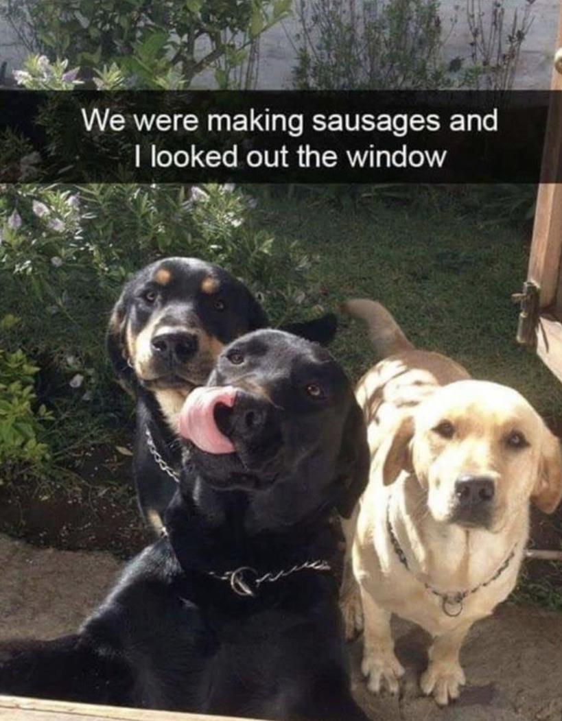 Dogs be like - meme