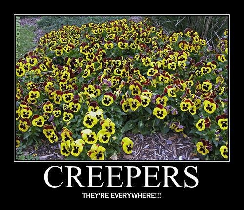 Están por todas partes!!!!! - meme