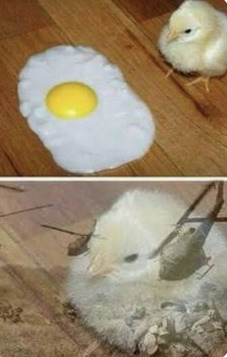 pollito y sus flashbacks XD - meme