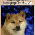 Un meme pa' tu perro y si no tienes, pa' tu gato