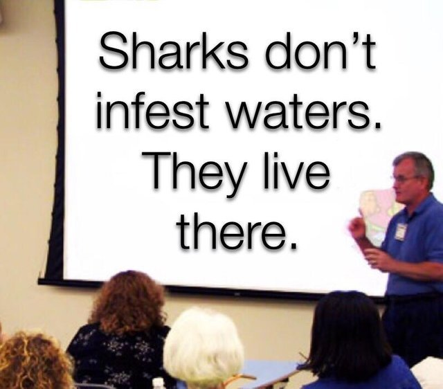 Sharks don't infest waters. They live there - meme