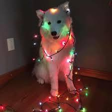 I didn't want to spend time working on my lights for the house - meme