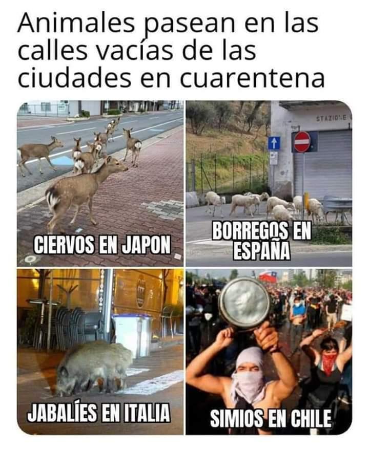 Animalitos en las calles - meme
