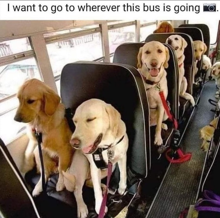 all aboard to bitchland - meme