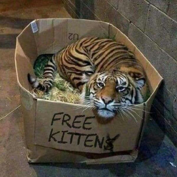 Kitten - meme