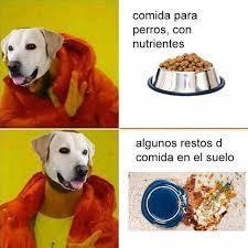 Mi perro v: - meme