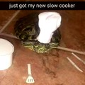 Cooking turtle