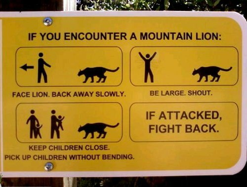 What to do if you encounter a lion - meme