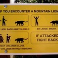 What to do if you encounter a lion