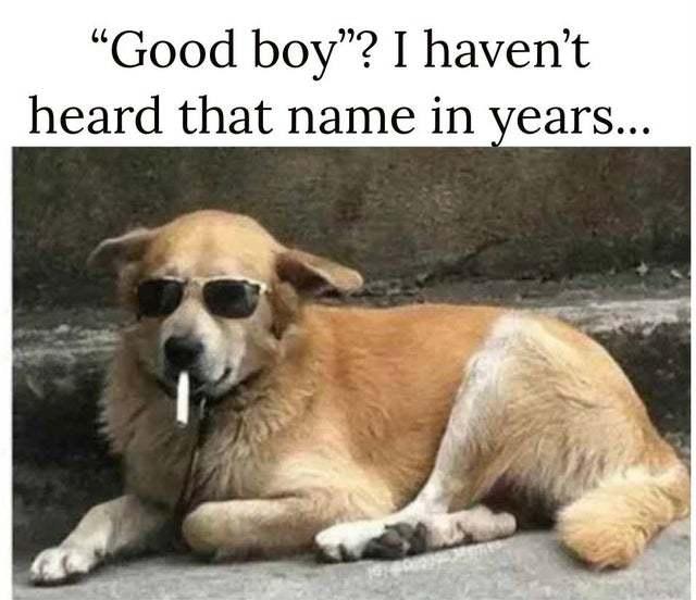 Good boy - meme
