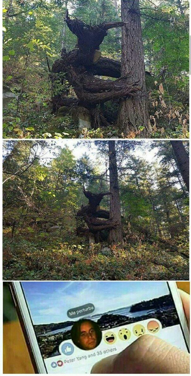 Vas tranquilamente al bosque hasta que te encontras con esto. - meme