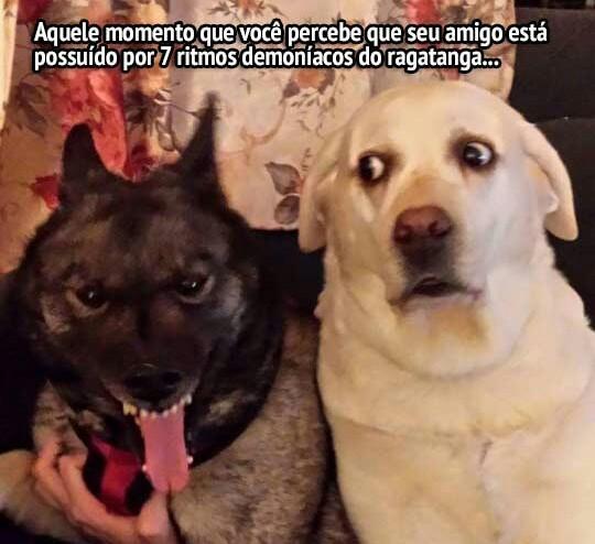 Cachorros #4 - meme