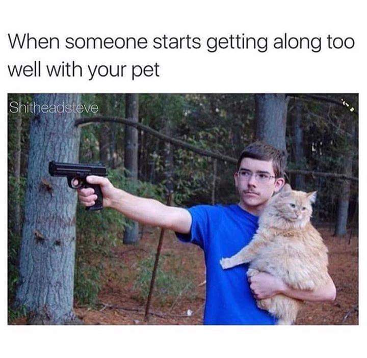 Purr down my animal - meme