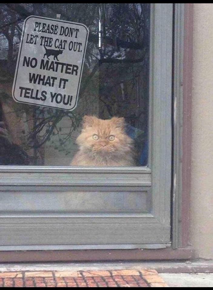 S'il vous plaît ne laissez pas sortir le chat… peu importe ce qu'il vous dit ! - meme