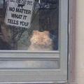 S'il vous plaît ne laissez pas sortir le chat… peu importe ce qu'il vous dit !