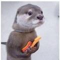 Proud and disappointed otter