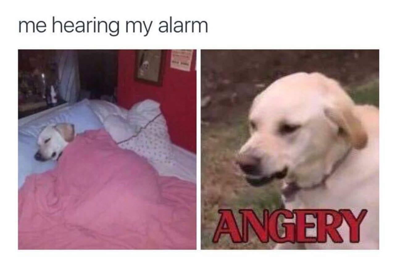 Most angery - meme