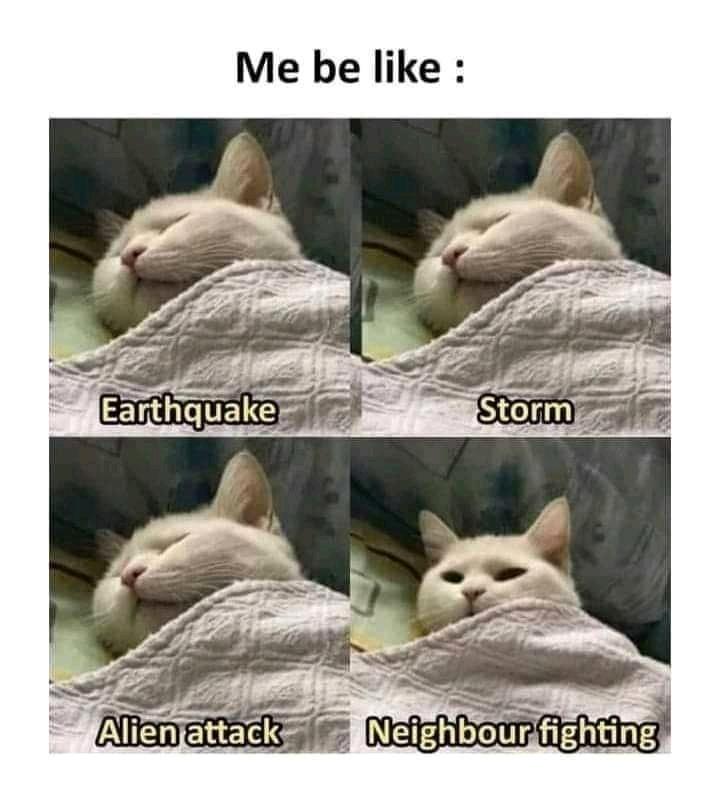 A cat - meme