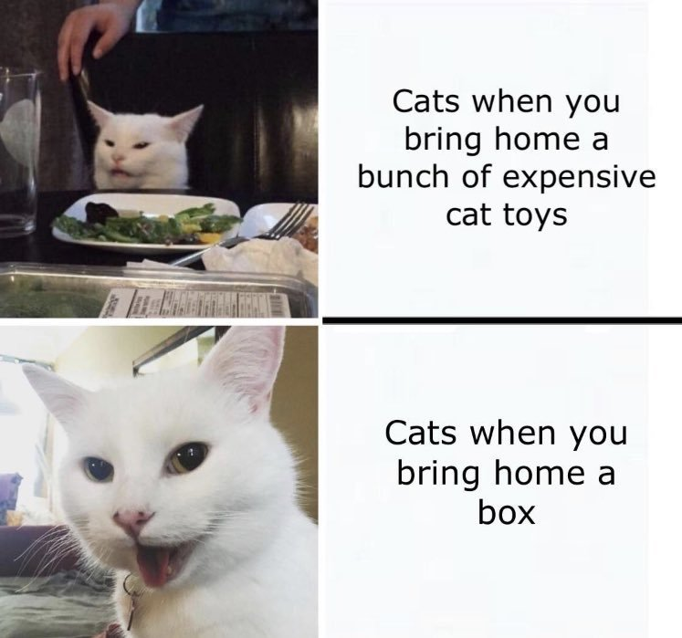 love cats - meme