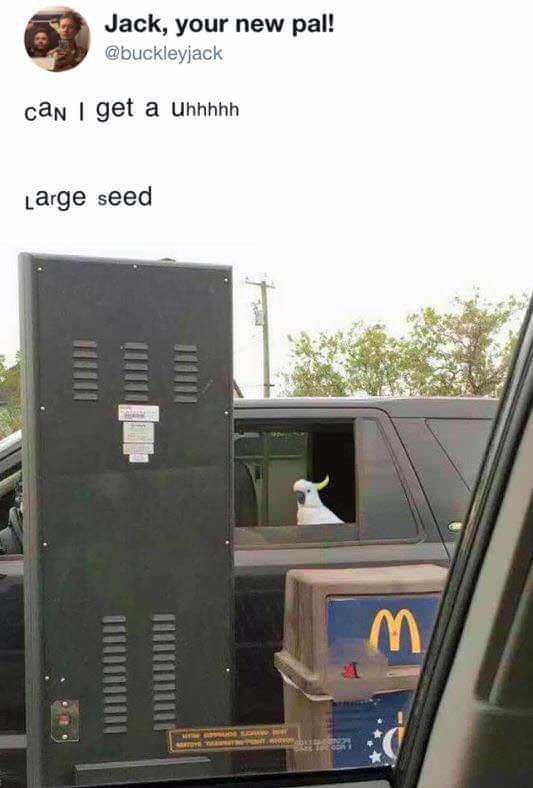 Can I get a large seed? - meme