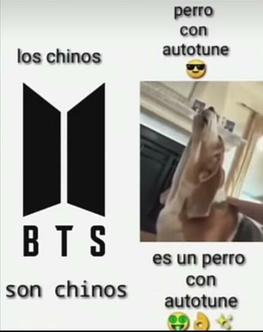 Perro con autotune  - meme