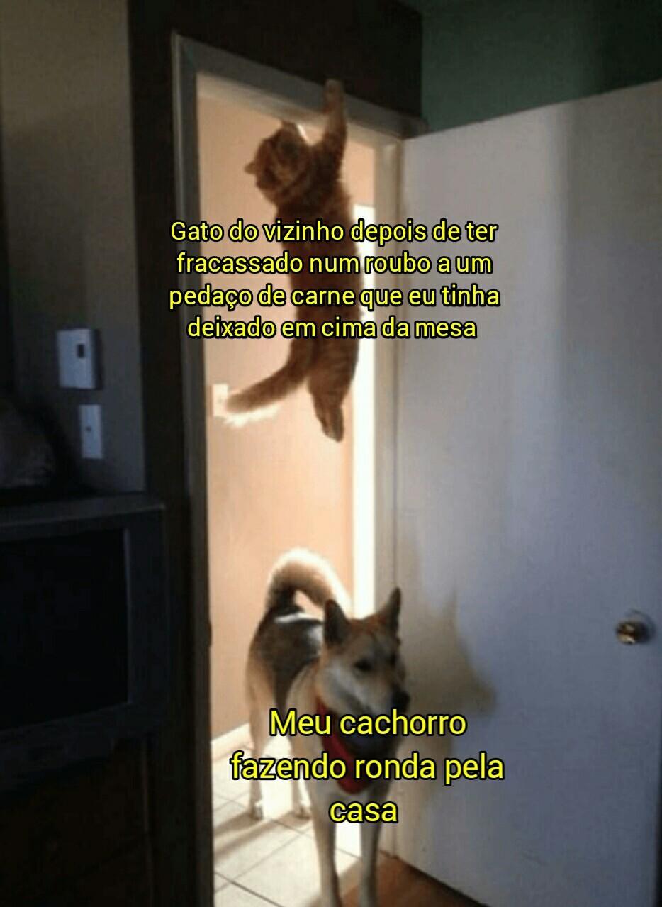 Coitado do gatinho - meme