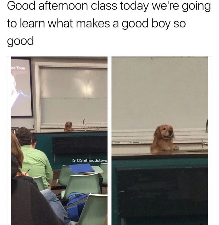 Who's a good boy? - meme