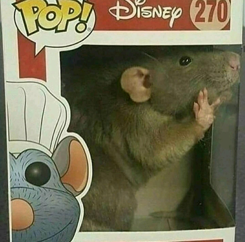 Disney rat - meme