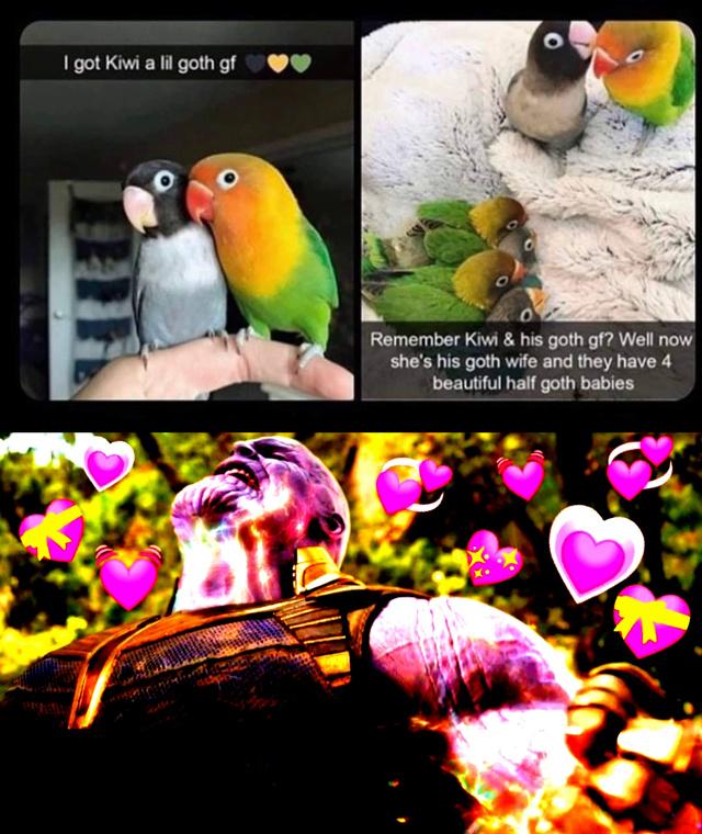 Kiwi and his goth girlfriend - meme