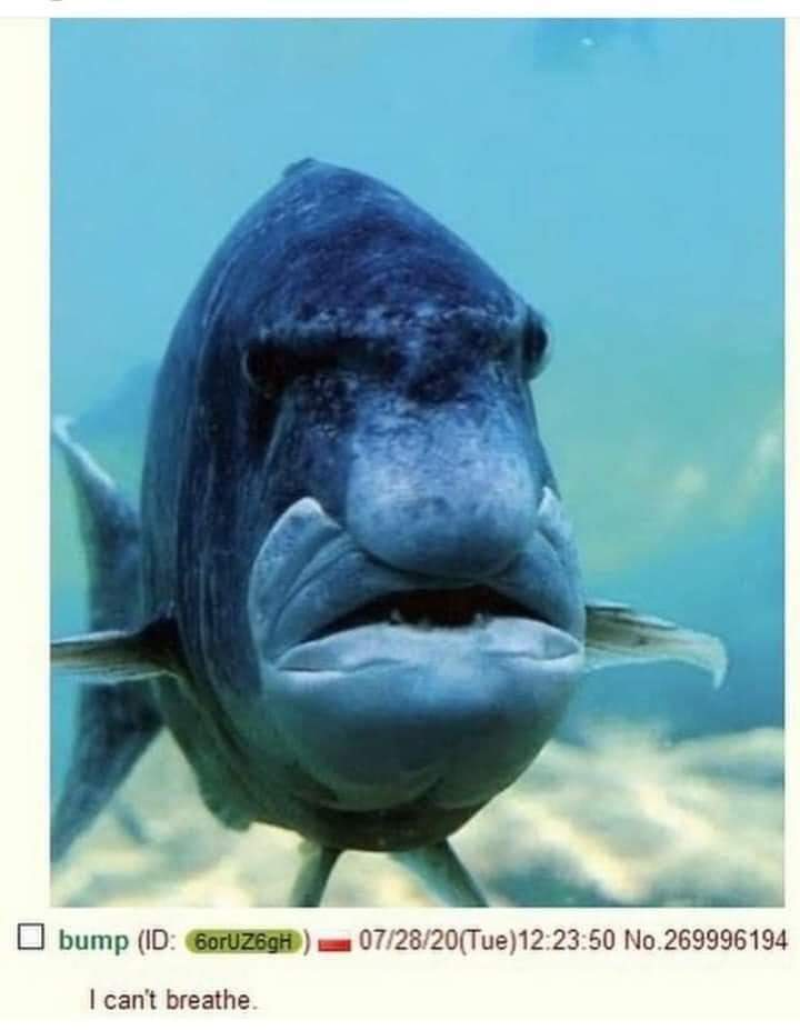 The Gerge Floyd fish - meme