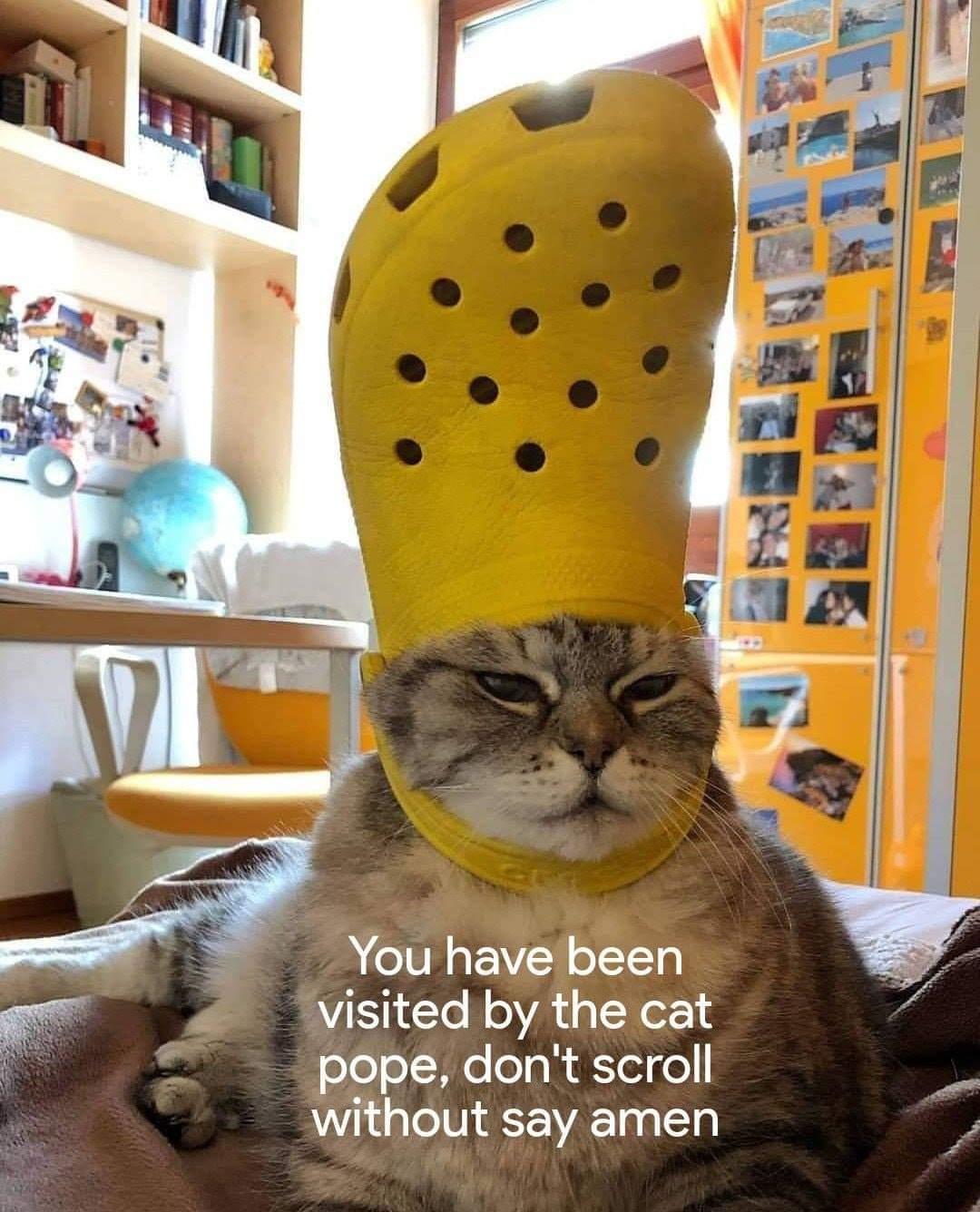 Cat pope - meme