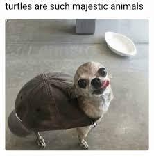 Turtles - meme
