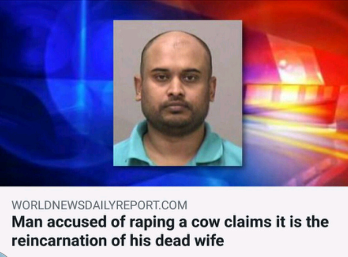 Cow rape - meme