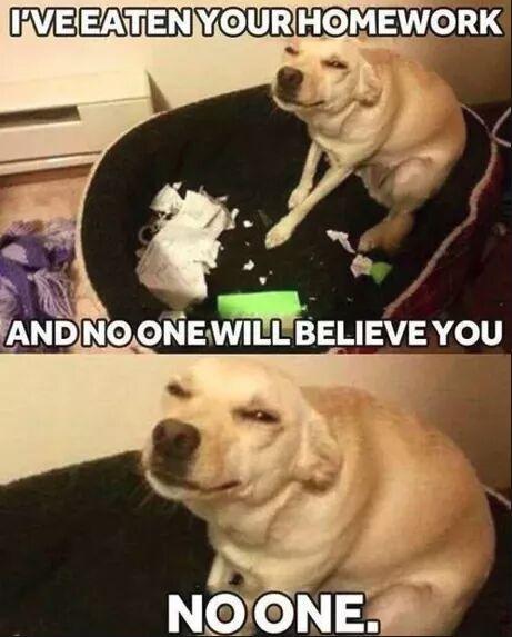 Faite gaffe à ce chien - meme