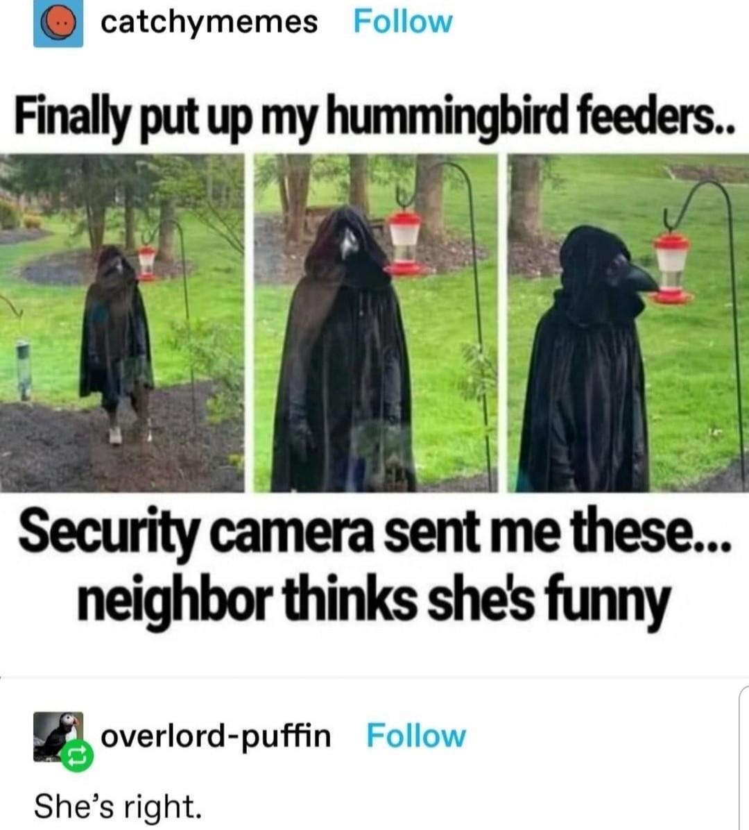 Sexy hummingbird - meme