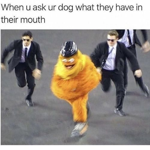 dog times - meme