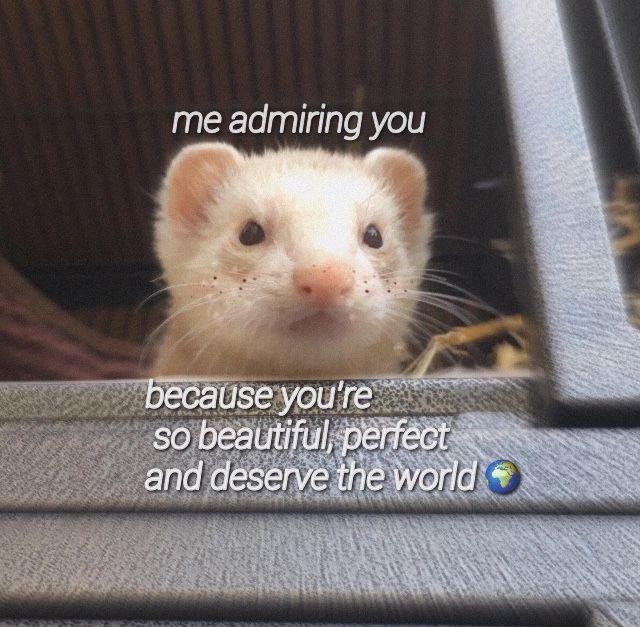 yes it true - meme