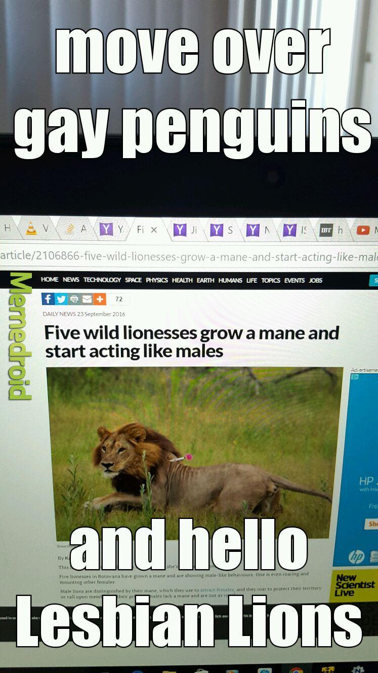 Lesbian Lions (LL) - meme